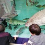 水族館の入場料がもったいないので、ここで節約する。